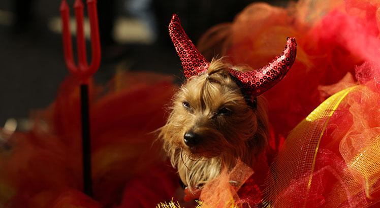Costumed Pooches Prance In Annual Halloween Dog Parade In New York City